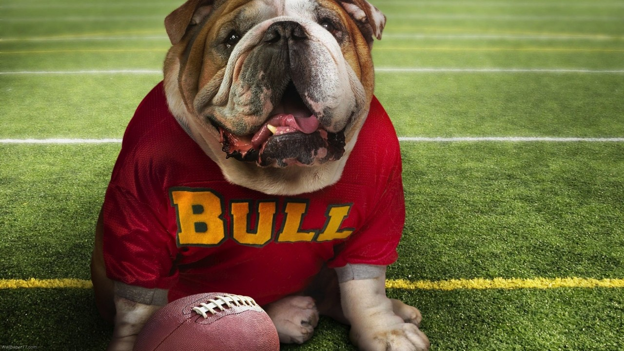 hd wallpaper Funny Doggy Football Time fun wallpapers funny wallpapers cute