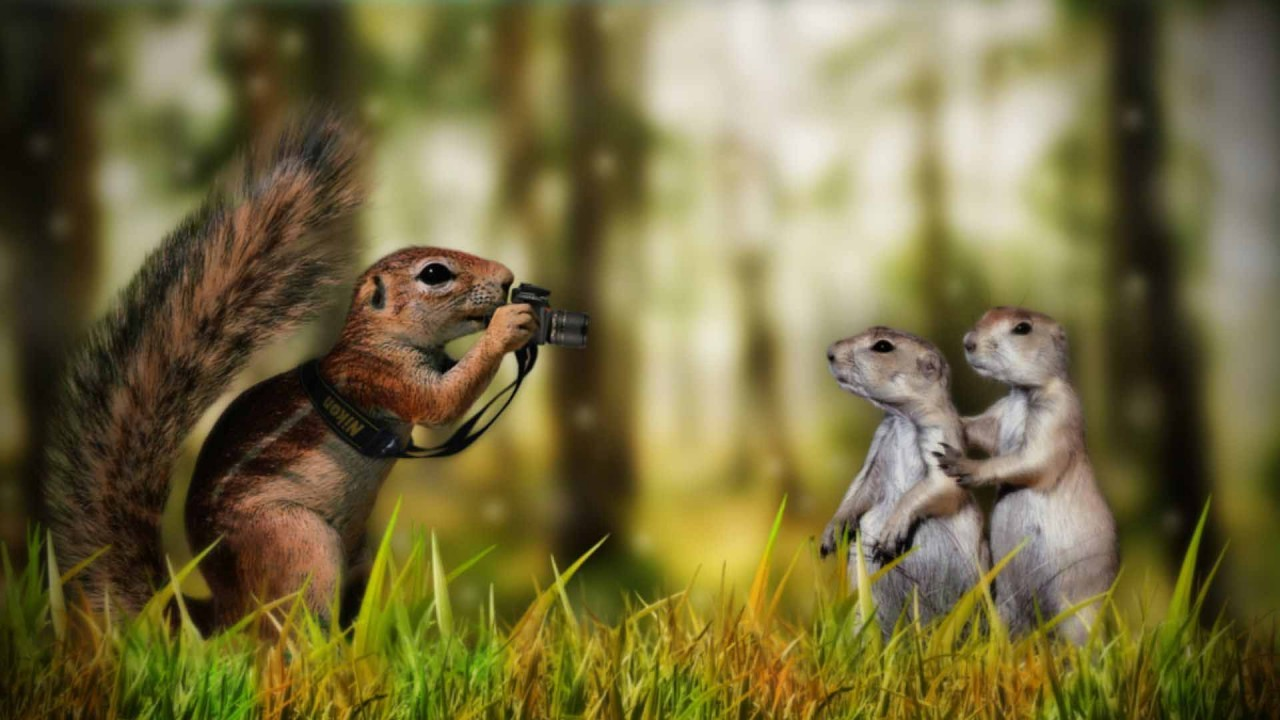 hd wallpaper funny animals wallpapers