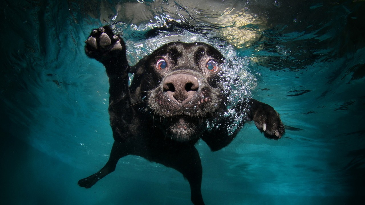 hd wallpaper funny dog diving