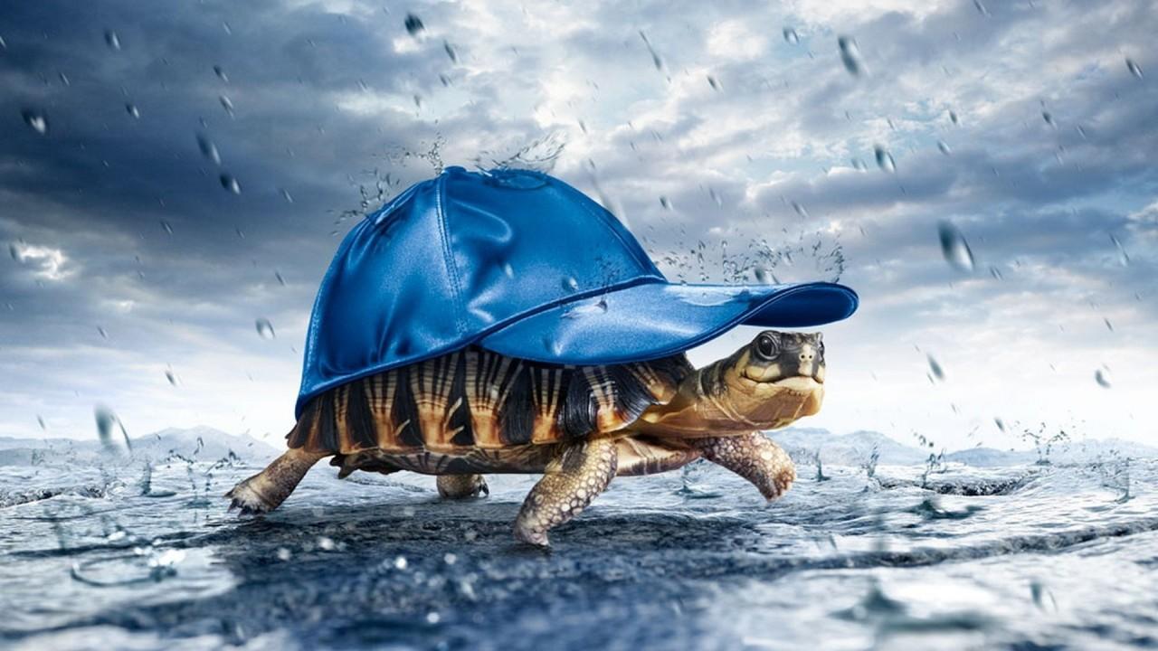 hd wallpaper rain turtle
