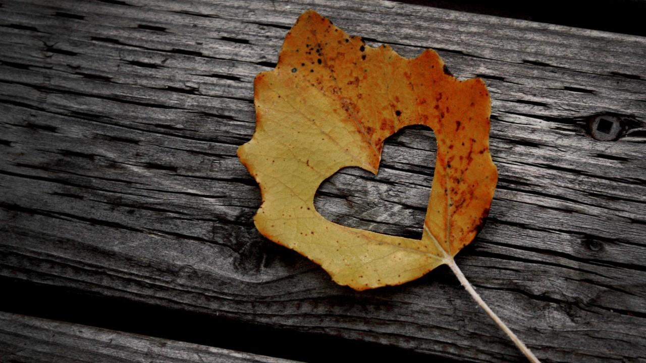 hd wallpaper love leaf