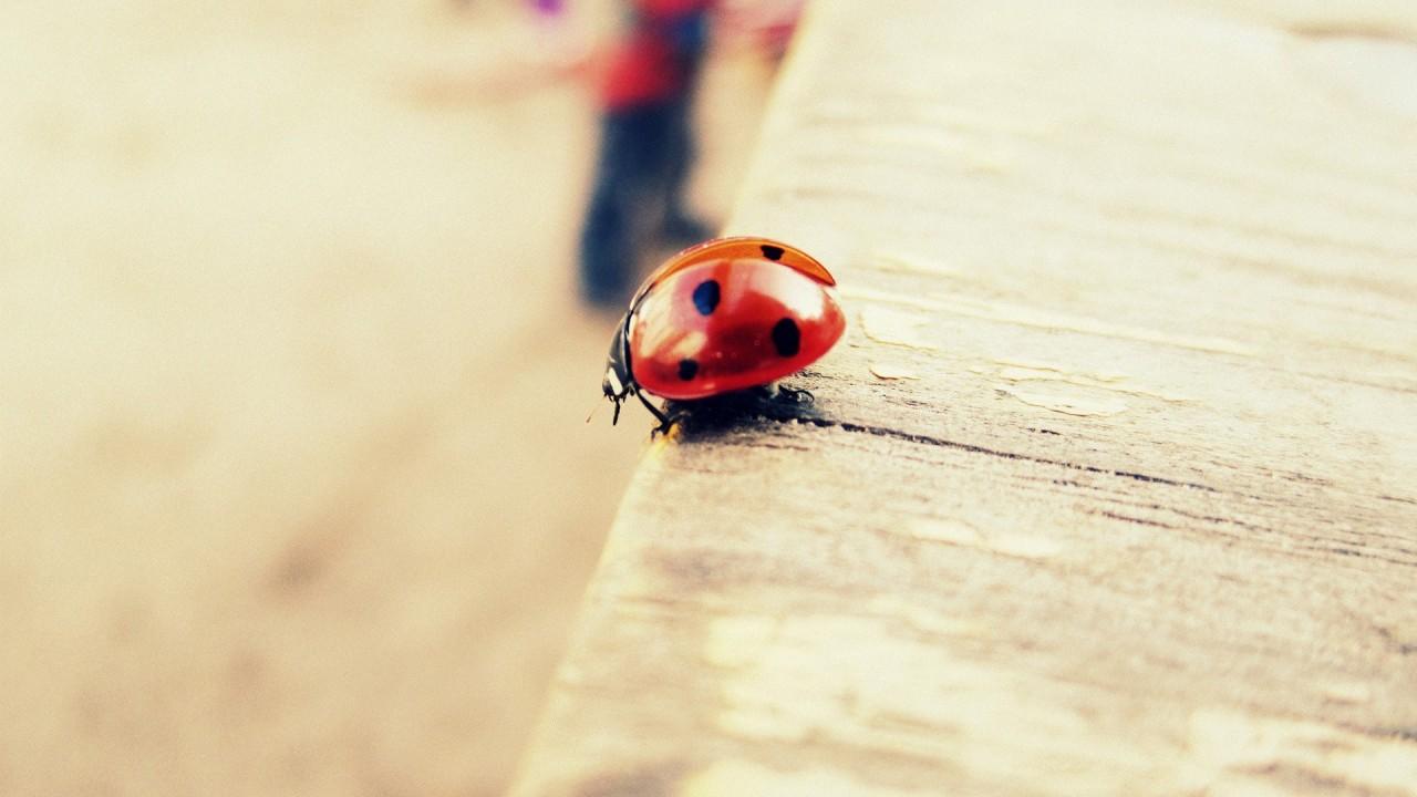 hd wallpaper insect macro