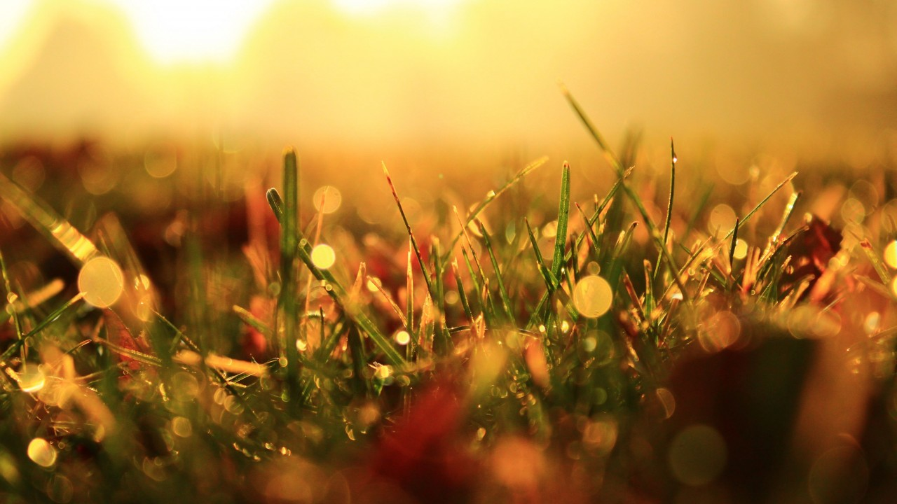 Reflections of light through the grass