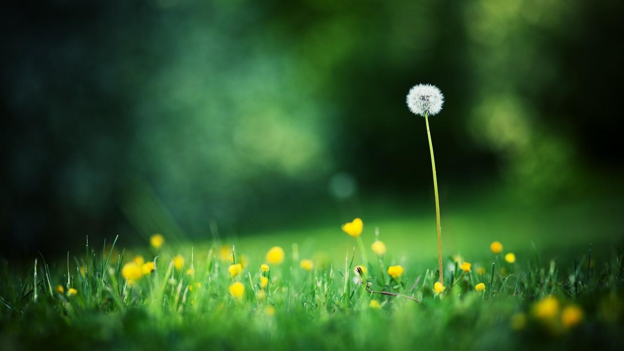 hd wallpaper wallpaper download free grass