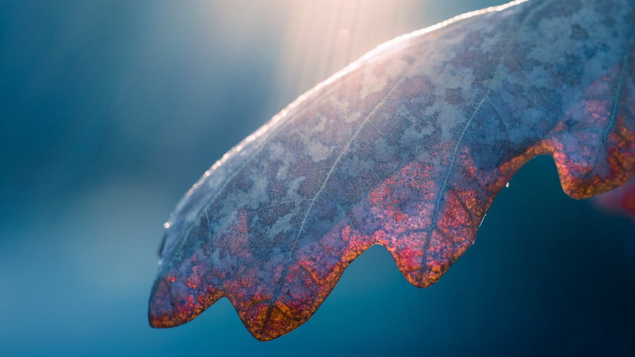 light on a leaf