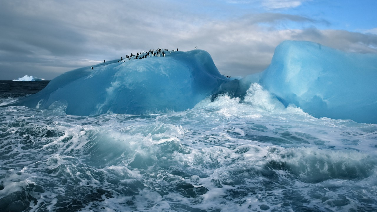 penguins on an iceberg