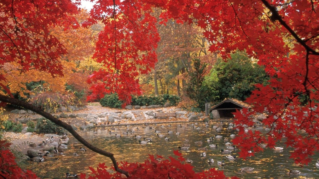 tree with red leaves lake