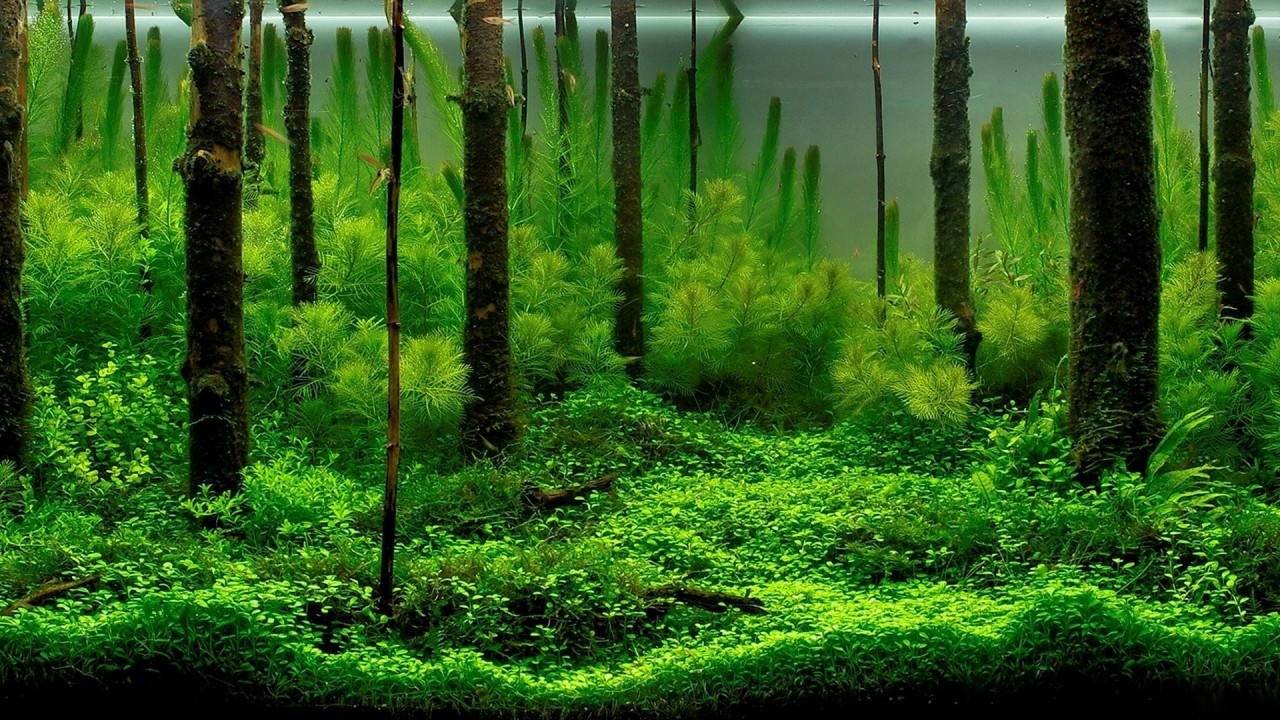 intense green forest