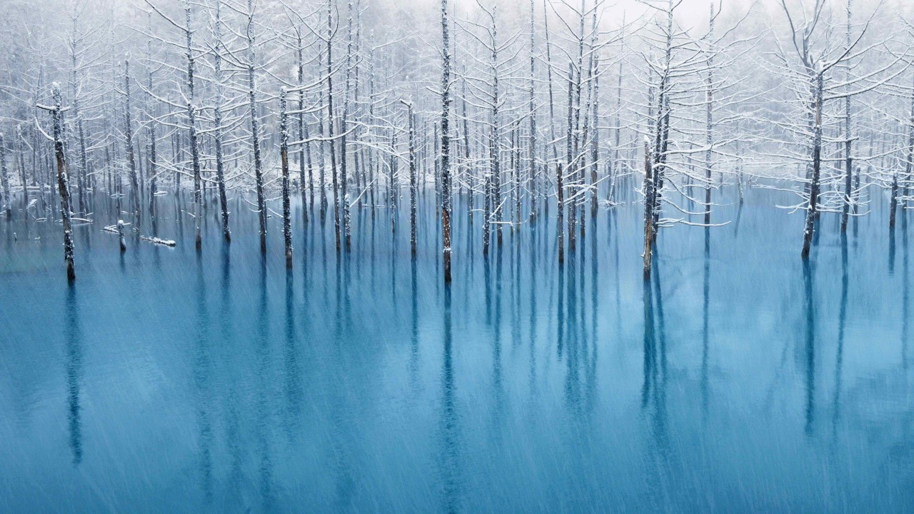 A flooded forest in winter