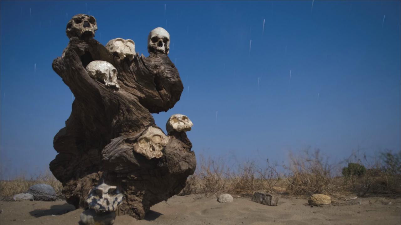 Various heads of human skeletons