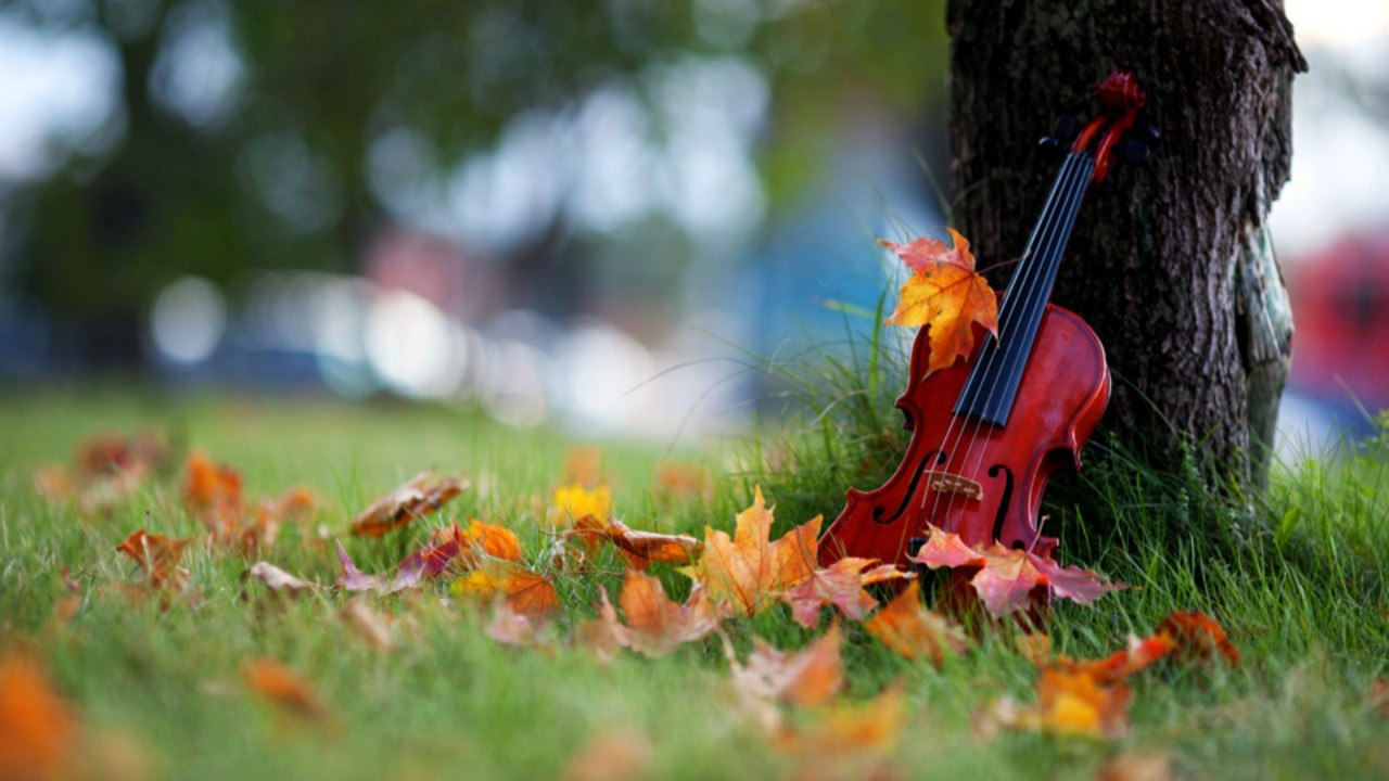 Violin resting on tree
