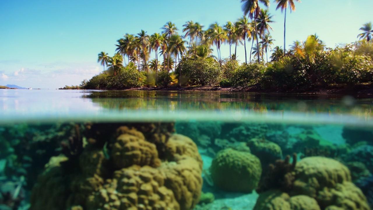 hd wallpaper ocean plage corail