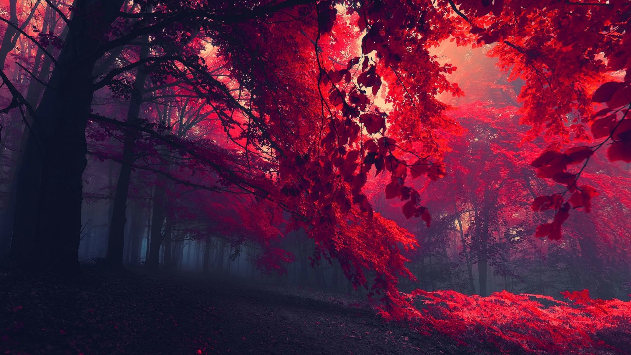 Red forest at sunset