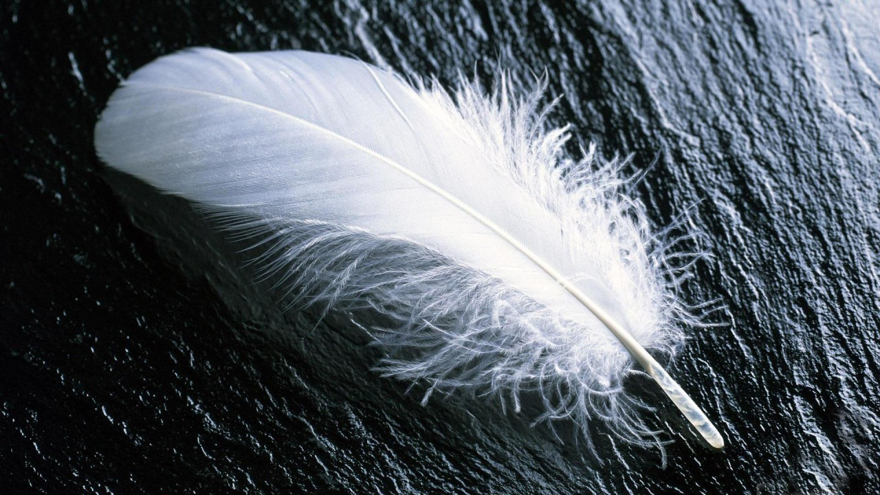 feather on a black stone