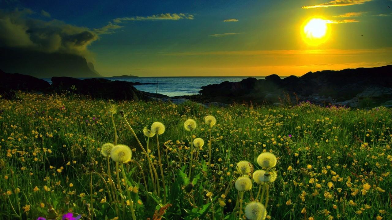 green field on sunny beach