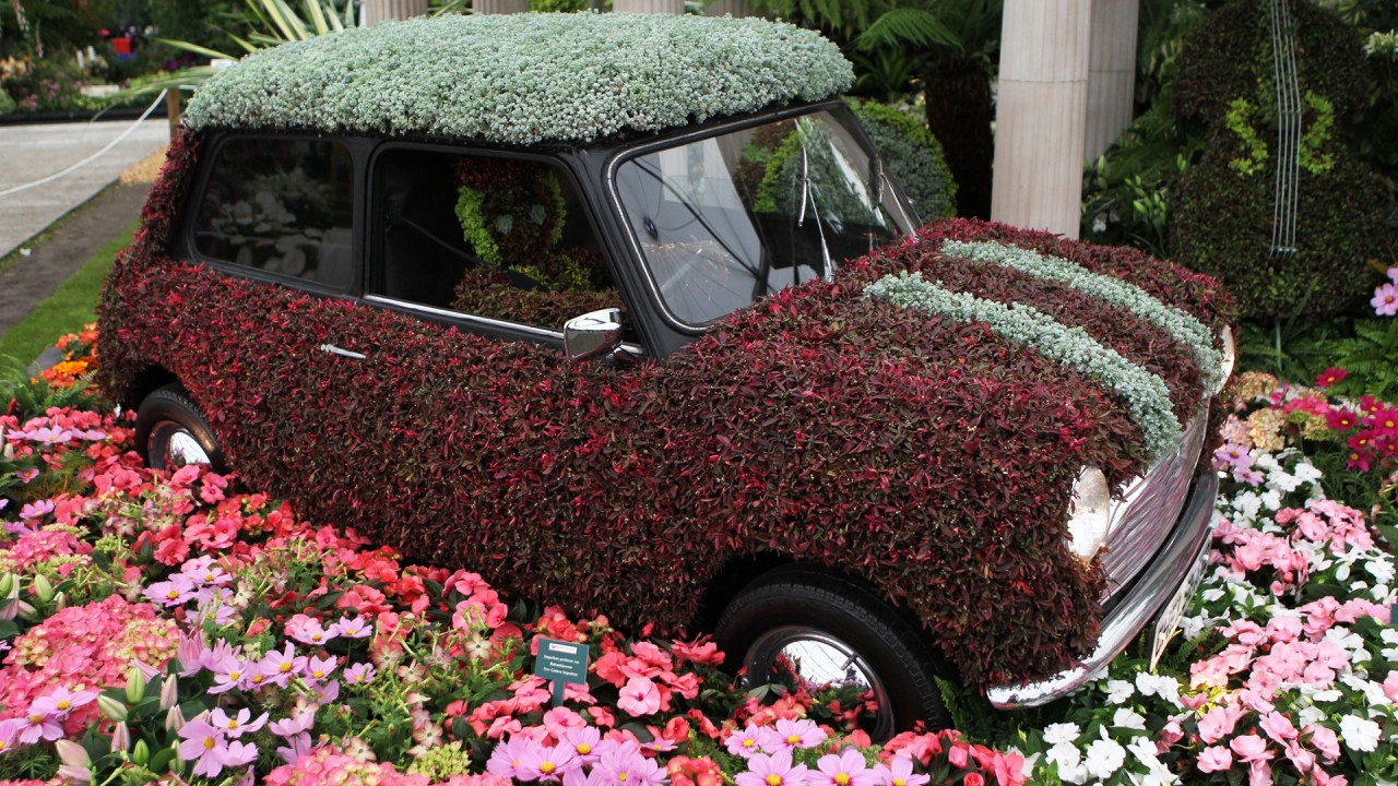 hd wallpaper car covered flowers