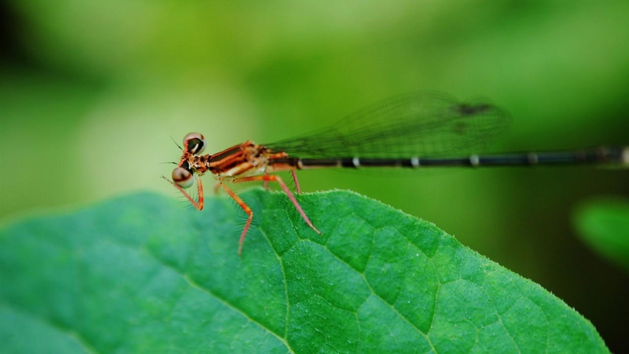 hd wallpaper summer dragonfly