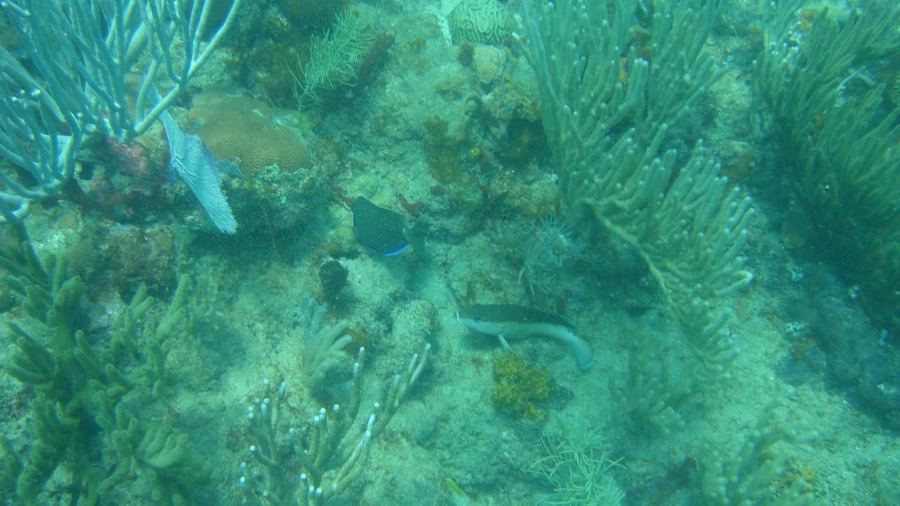 hd underwater picture beautiful hd wallpaper