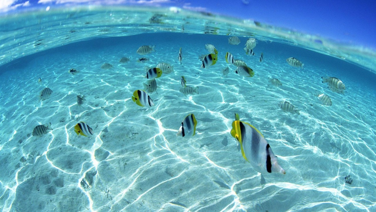 hd wallpaper underwater fish