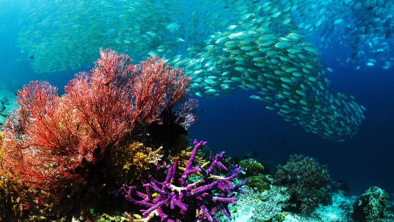hd wallpaper underwater wallpaper beautiful