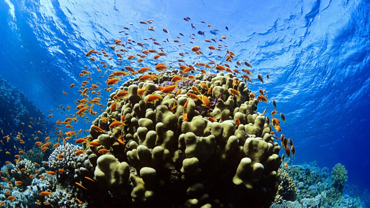 underwater hd wallpaper
